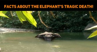 Facts About The Elephant's Tragic Death
