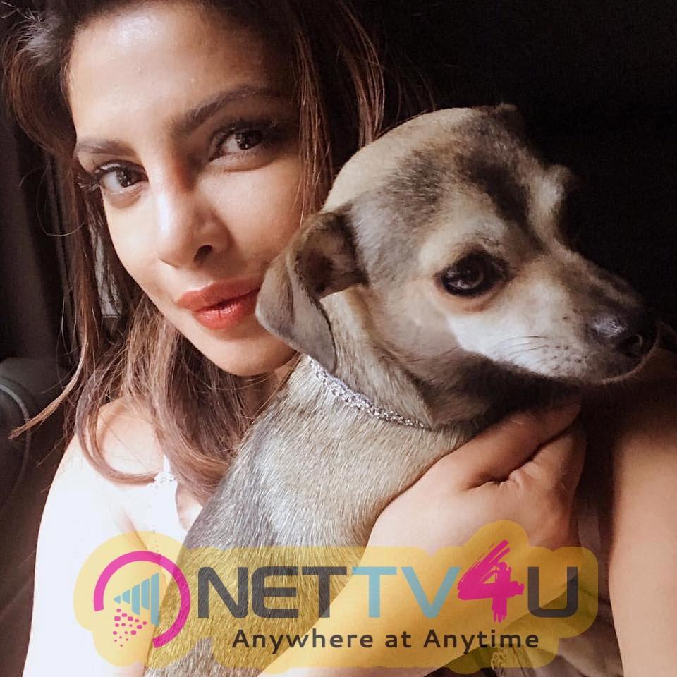 Actress Priyanka Chopra Romantic Pics Hindi Gallery