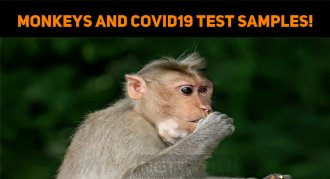 Monkeys Grabbed The Covid19 Test Samples!