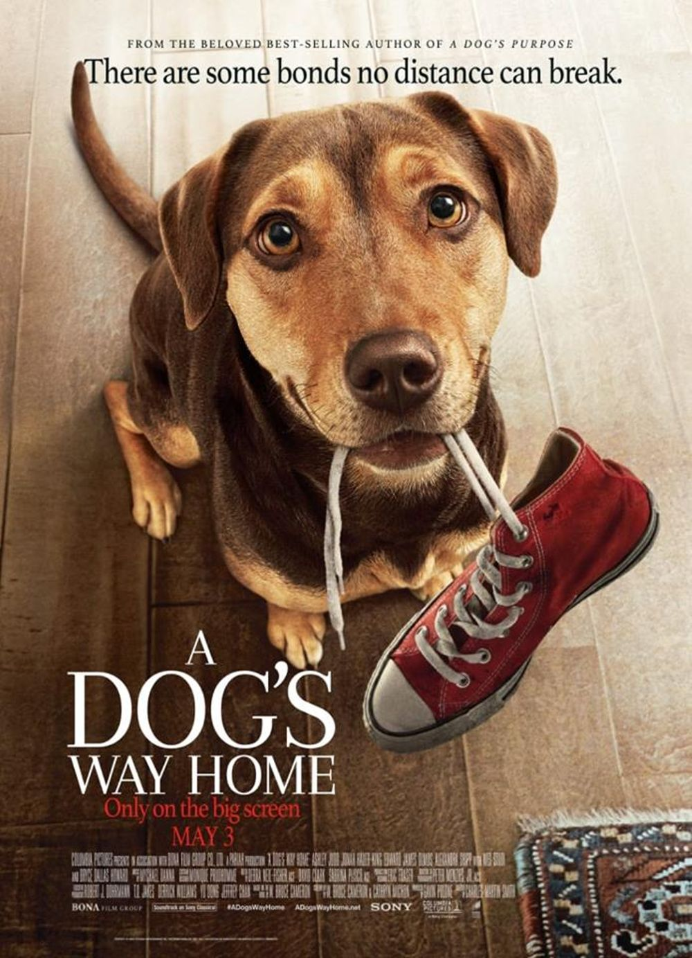 A Dogs Way Home Movie Review