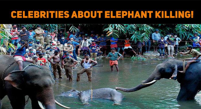 Celebrities Raise Their Voice Against Elephant ..