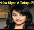 Trisha Signs A Telugu Film?