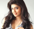 Pranitha Sounds The Clapboard For Upcoming Kannada Flick
