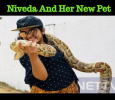 Bold Niveda With Python! Tamil News