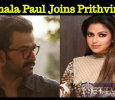 Amala Paul To Be A Part Of Prithviraj's Movie! Tamil News