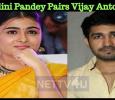Shalini Pandey Pairs Vijay Antony? Tamil News