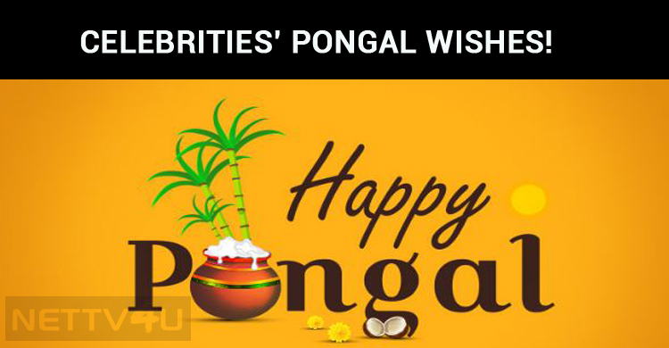 Celebrities Pongal Wishes!
