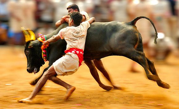 Students Protest To Lift The Ban On Jallikattu Reaches Heights!