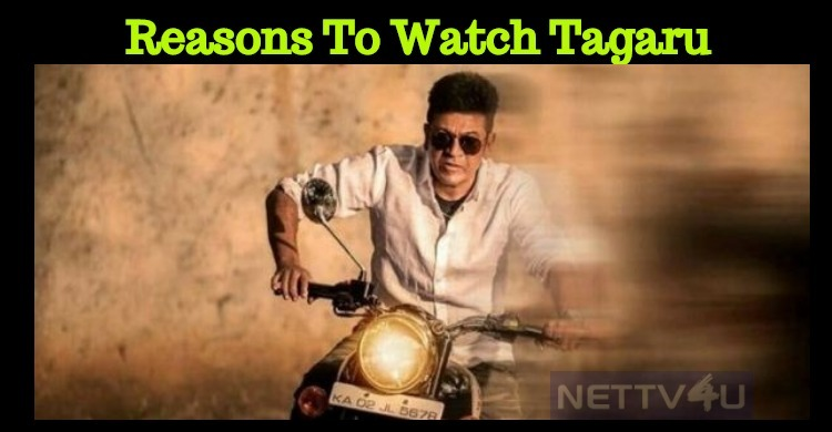 Reasons To Watch Shivanna's Tagaru!