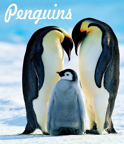 Penguins Movie Review English Movie Review