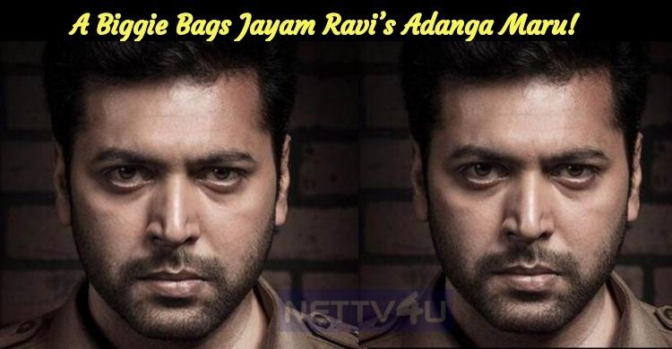 A Biggie Bags Jayam Ravi's Adanga Maru!