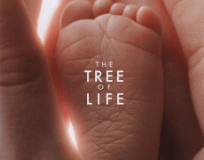 The Tree Of Life Movie Review English Movie Review