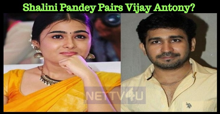 Shalini Pandey Pairs Vijay Antony?