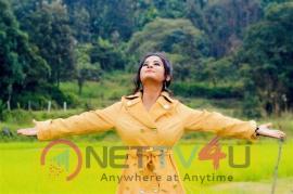 Actress Anusha Rai Attractive Pics  Kannada Gallery