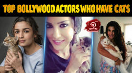 Top 10 Bollywood Actors Who Have Pet Cats