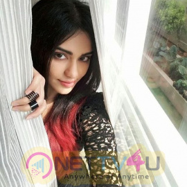 Adah Sharma Photos Telugu Gallery