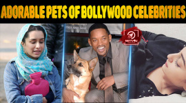 Top 10 Adorable Pets Of Bollywood Celebrities