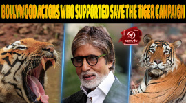 Top 10 Bollywood Actors Who Supported The Save The Tiger Campaign