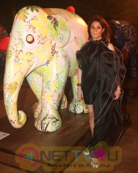 A Fund Raising Evening In Support Of Elephant Campaign Hindi Gallery