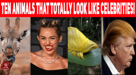 Ten Animals That Totally Look Like Celebrities!