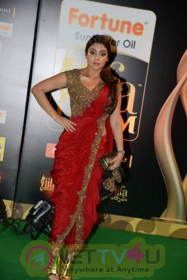 Actress Shriya Saran Exclusive Images @ IIFA Utsavam