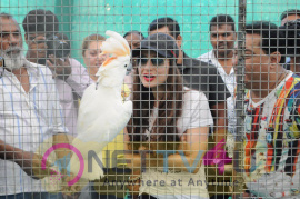 Ameesha Patel At Babloo's Zorang Exotic Pet Show In Mumbai Photo Gallery Hindi Gallery