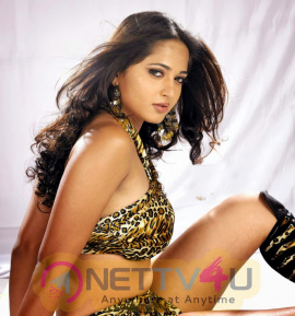 Tamil Actress Anushka Shetty Latest Hot Photos Tamil Gallery