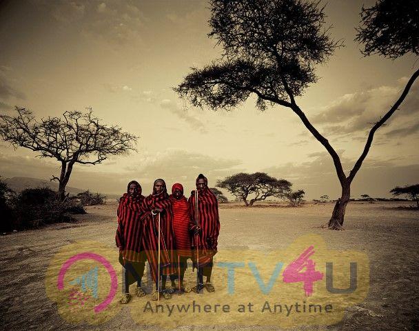 Jallikattu Is The First Tamil Language In The Masaiamara Region Of Kenya