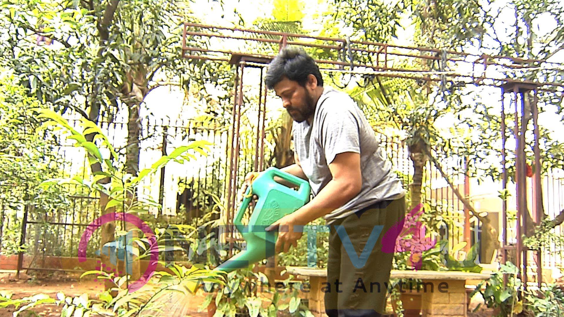 Megastar Chiranjeevi Saplings Planted Pics Telugu Gallery
