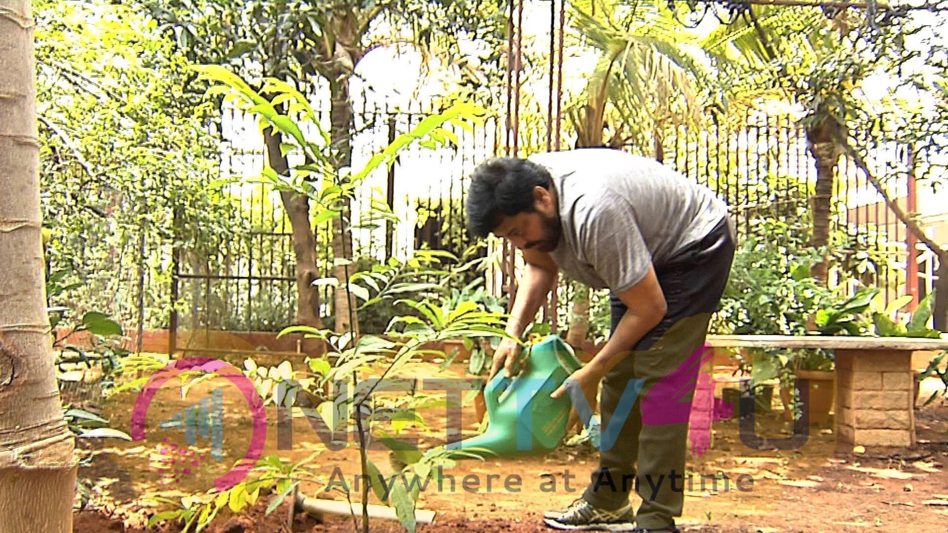 Megastar Chiranjeevi Saplings Planted Pics