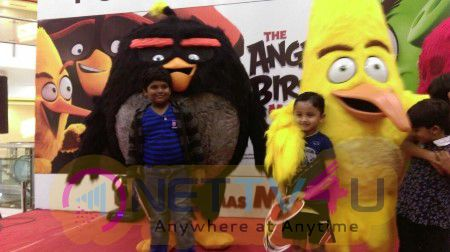 Angry Bird Visits Chennai Stills English Gallery