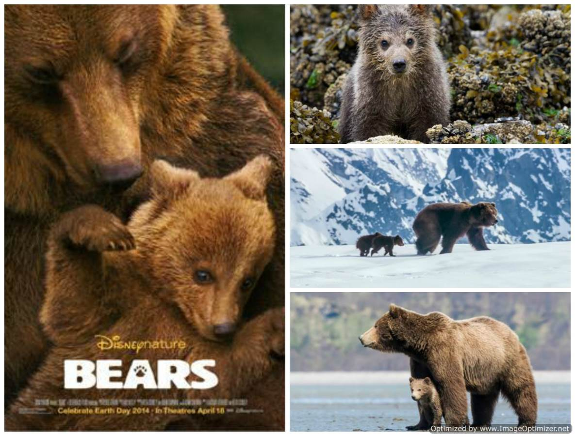Bears Movie Review English