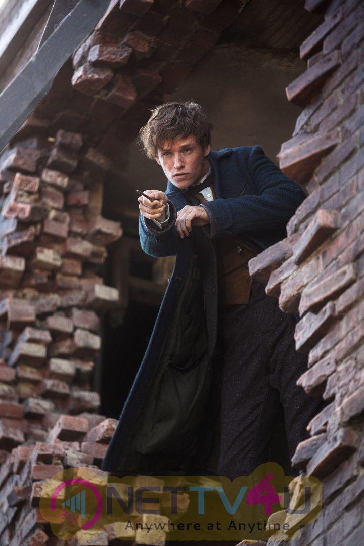 Fantastic Beasts And Where To Find Them Movie Images Tamil Gallery