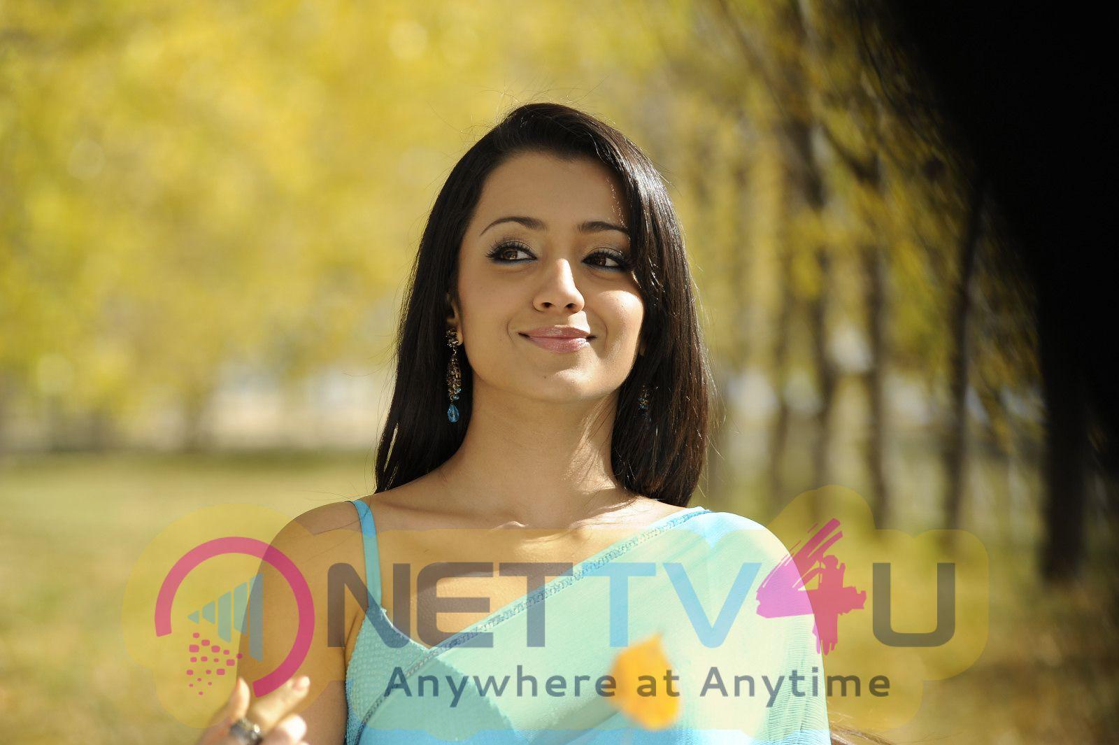 Tamil actress trisha hot what