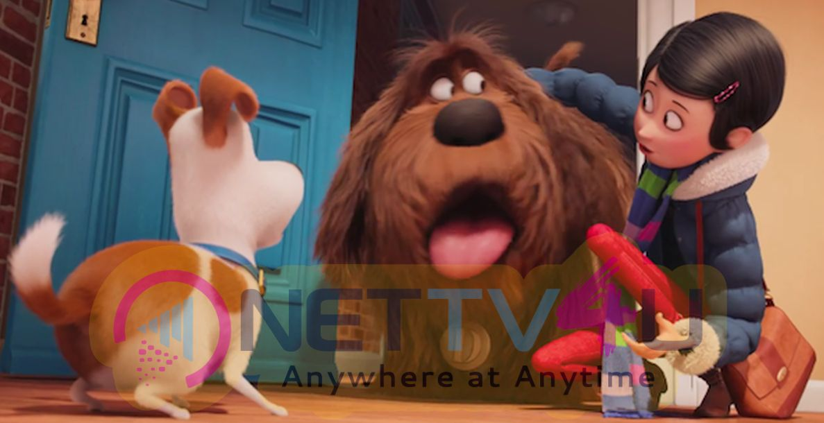 The Secret Life Of Pets Release Date 8th July 2016 Photos